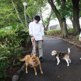 もえぎ野公園で犬の散歩