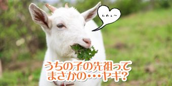 先祖はヤギ
