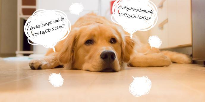 シクロホスファミドの副作用