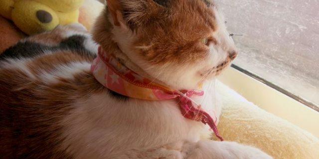 サプリメント5日目の猫