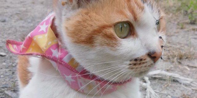 サプリメント11日目の猫