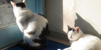 アルファ獣医科病院の猫