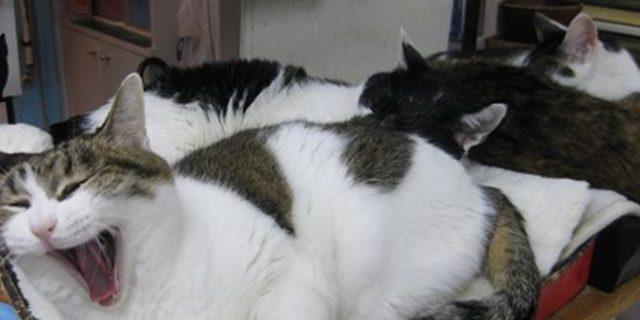 看板猫たち