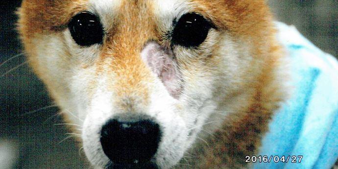 犬の皮膚炎