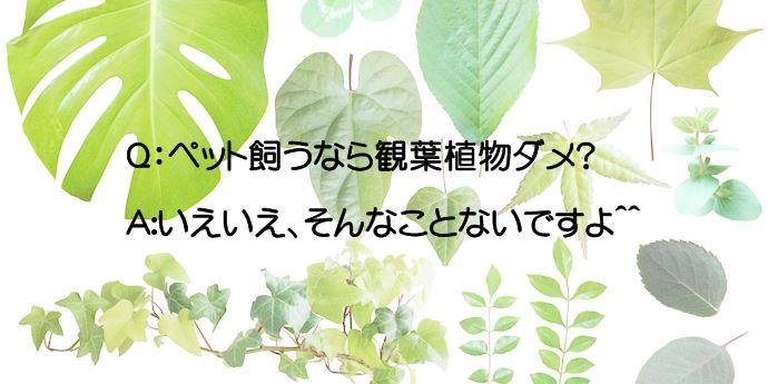 ペットと観葉植物の話