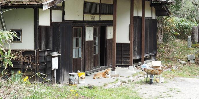 小平宿の犬