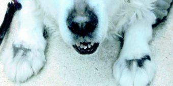 犬の多発性骨髄腫