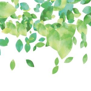 枝葉の知識