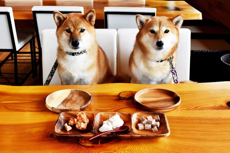 食事を待つ犬